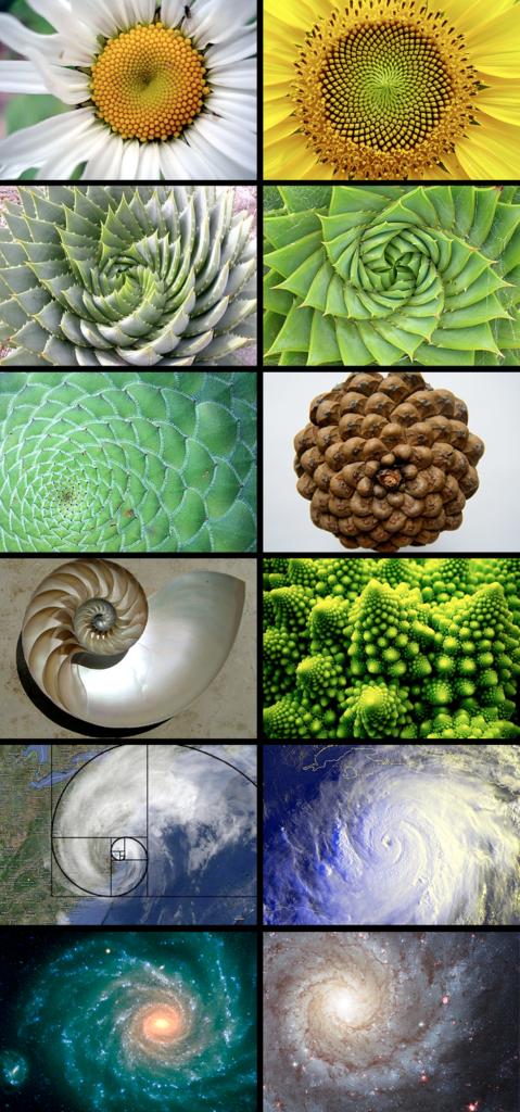 secuencia de Fibonacci